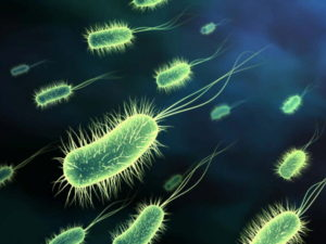 Probiotic the Good Bacteria