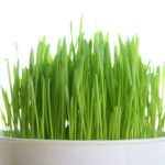 The Top 16 Proven Health Benefits of Wheatgrass